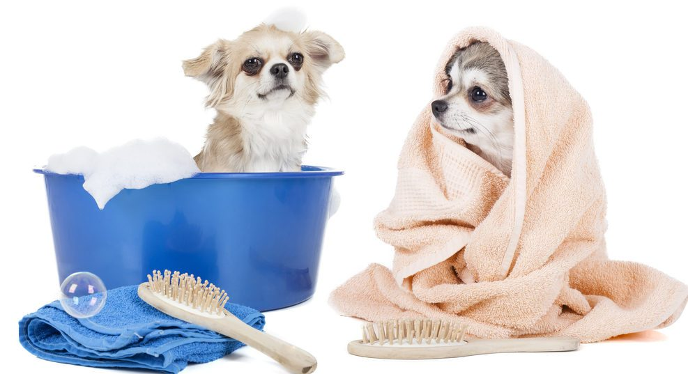 2-chis-in-bath-and-towel-shutterstock_151874597