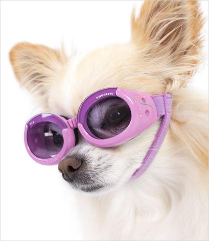 Doggles - Lilac with Flowers-$21.99