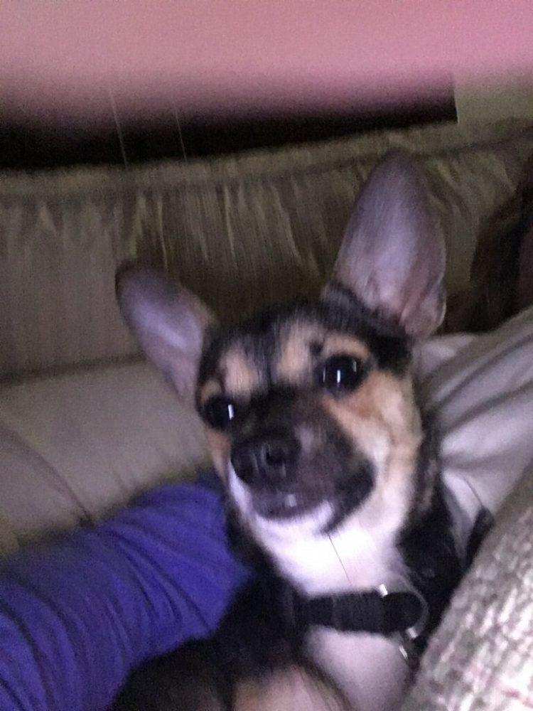 Meet Meeko