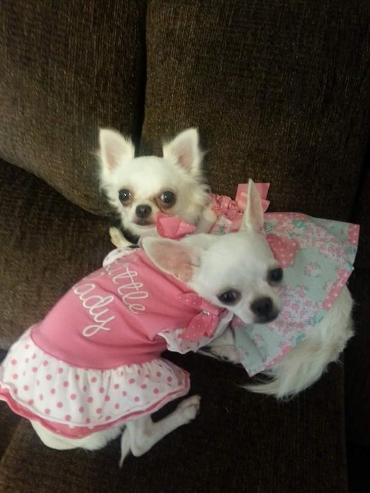 This is Marsha and Jojo, they belong to Barbie Ann Grasis
