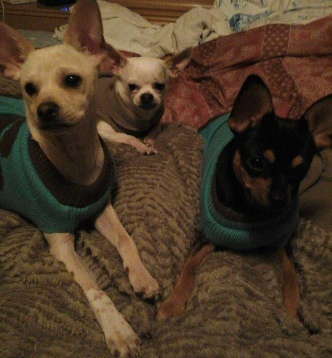 "These little cuties are from left to right; Rigby, Mickey and Adrian. They belong to Michelle Wiltrout and she says: "" rigby is adrians baby. Mickey is rigbys dad.  Our lil family."""