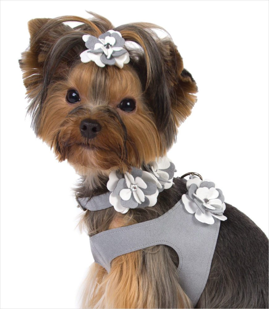 Special Occasion Dog Harness