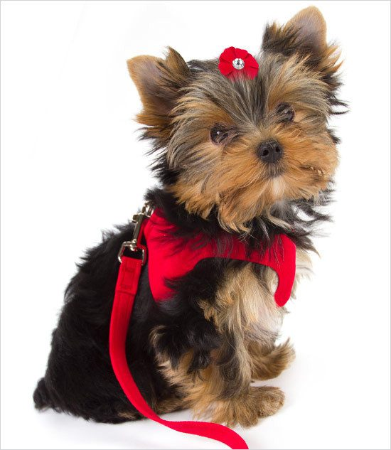 Susan Lanci Step-In Dog Harness
