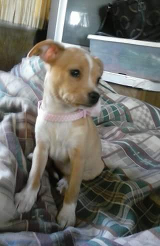This is Kiki who belongs to Marguerite Southerland