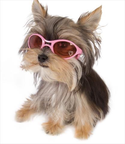 Rubber K9 Optix Dog Glasses-$17.99