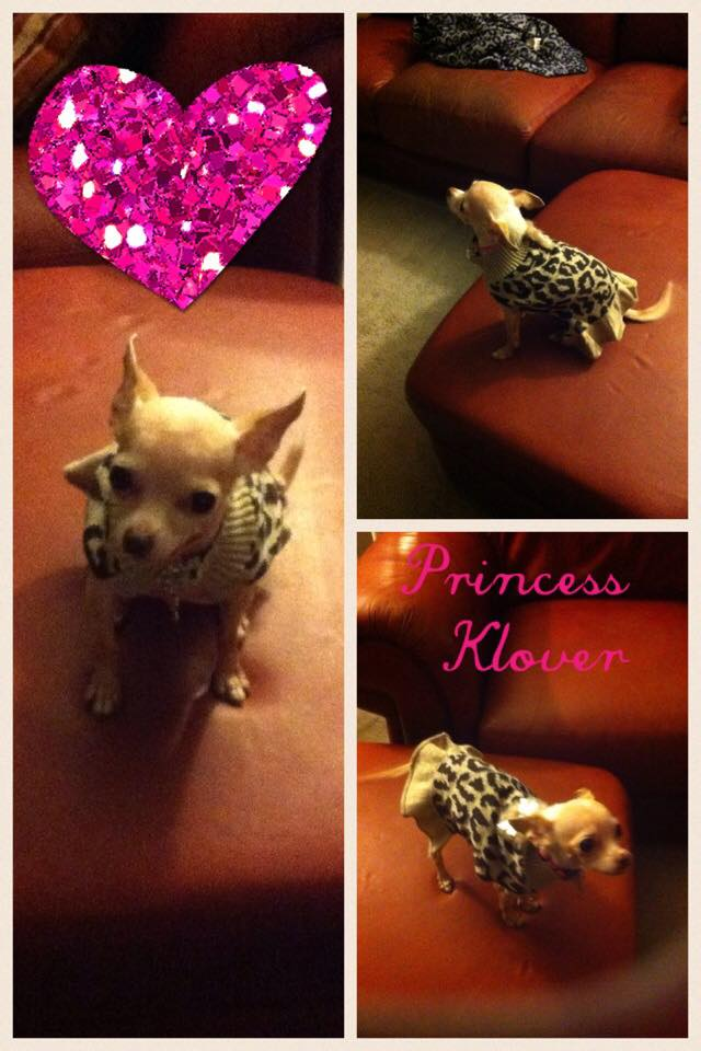Meet little Princess Klover, she belongs to Vickie Berg. Doesn't she look adorable in that little dress?