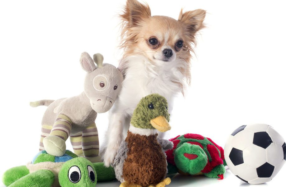 shutterstock_chi-with-toys-176159627