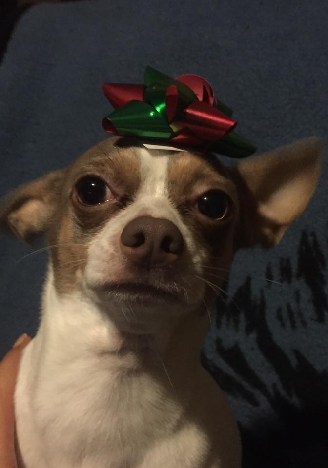 This is also Toby showing off his Xmas Hat, he belongs to Dora Cabral