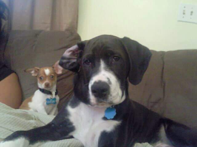 This is Rocky and his brother Tyson, they belong to Maria Rodriguez