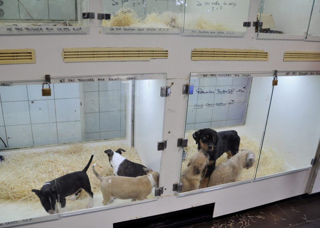 Is using a crate cruel? puppies in a glass cage in a pet store