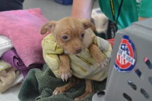 63-chis-rescued-dog5