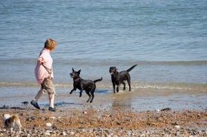 dogs-playing-on-beach