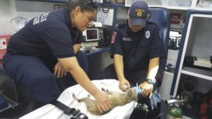 fireman-performing-cpr-news-story