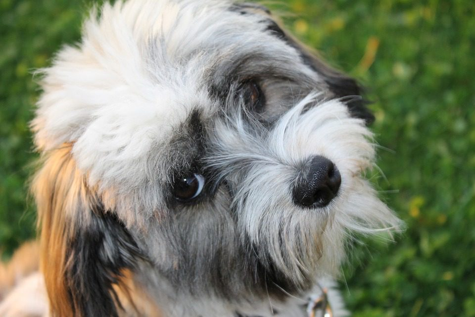 Information on All Small and Toy Breed Dogs