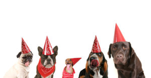 shutterstock_dog-party-128582756