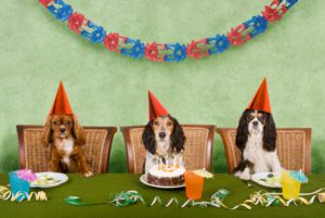 shutterstock_dog-party-93388699