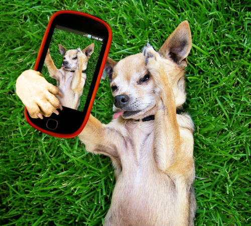 chi-selfie-shutterstock_201103208