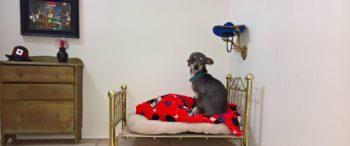 ht_dog_bedroom_bed_em_160907_12x5_1600