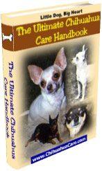 chihuahua-care