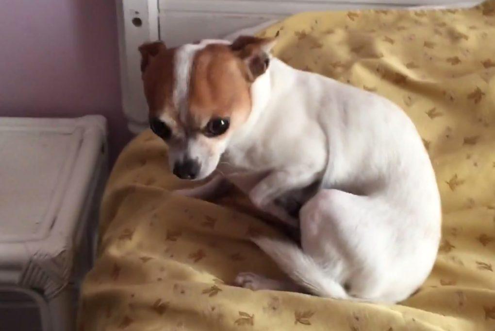 Pancho Sneaks A Nap