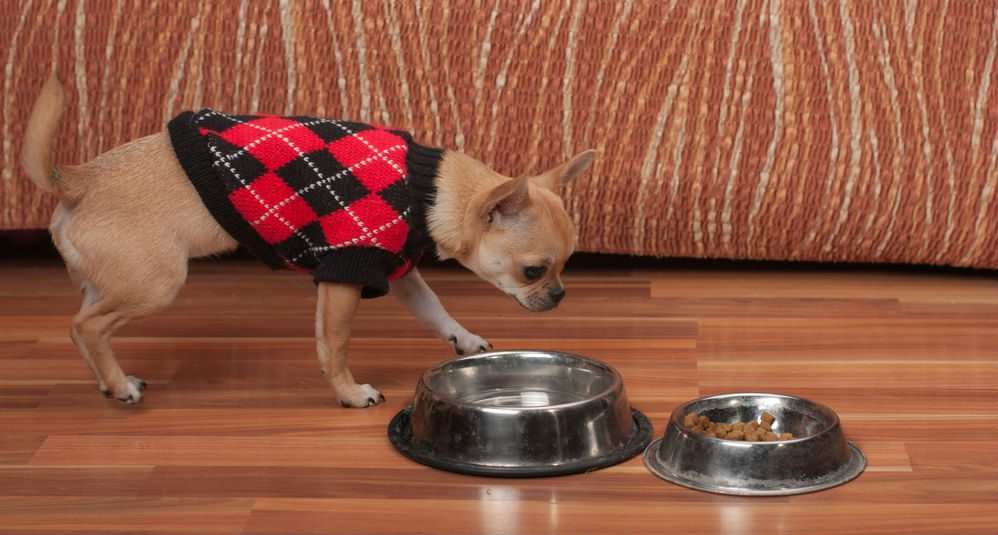 how to stop your chihuahuas aggression. does your chihuahua guard his toys or food?