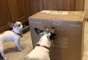 a big box that says NomNomNow with two Chihuahuas examining it, one is licking her lips