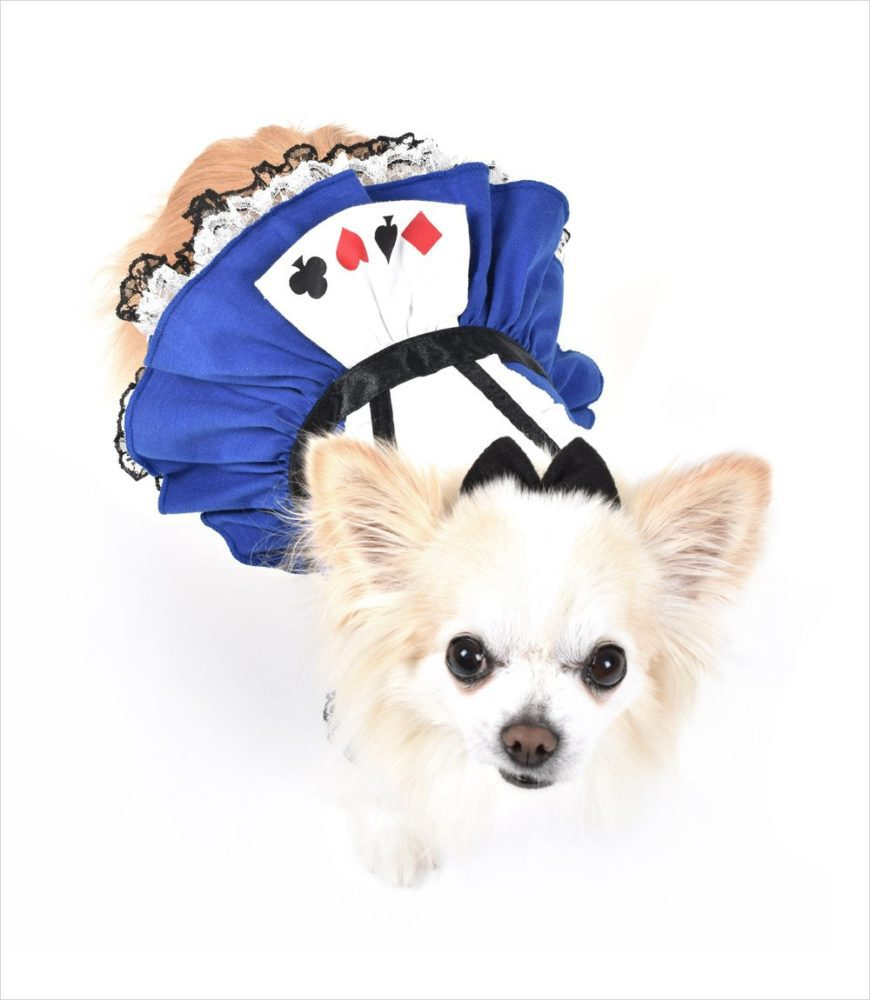 Suits-Dog-Dress-Top-View