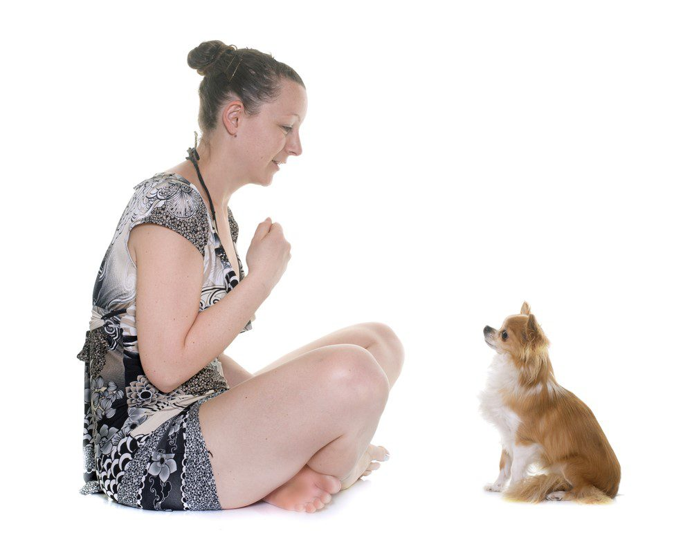 woman sitting on floor with a chihuahua facing her in a sitting position on white background